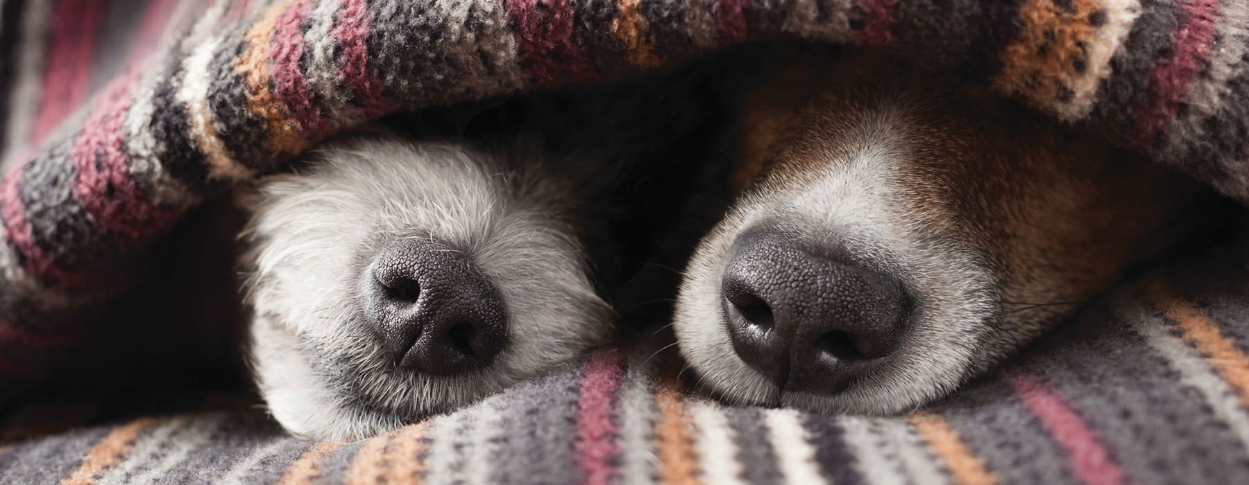 lifestyle image of dogs